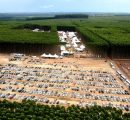 Brazil to host the largest dynamic forestry fair in the world