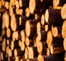 Polish wood industry calls for ban on roundwood exports as prices skyrocket