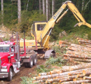 Timber company in the UK fined under EUTR
