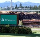 Weyerhaeuser reaches $269 million net sales in Q1/2018