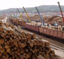 Overview of the Russian wood based products market