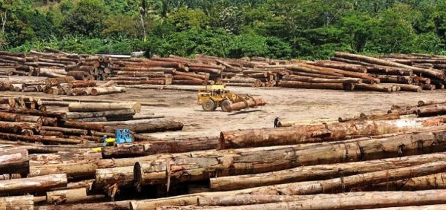 Malaysian log exports might suffer further cuts, affecting traders