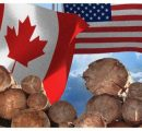 WTO decision on softwood lumber cheered by Canada, denounced in US