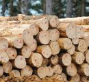 New Zealand log exports recover after Chinese New Year