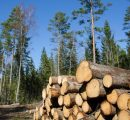 UK standing timber prices go 30% up during March 2017-March 2018
