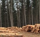 Japanese forestry giants expand in New Zealand as Asian wood demand grows