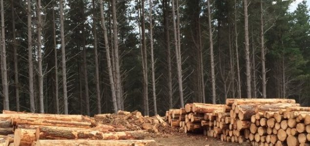 New Zealand's forest industry preparing to get back to work