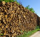 Falling pulpwood prices around the world
