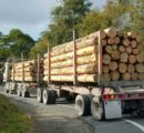 New Zealand log export prices hit 25-year high