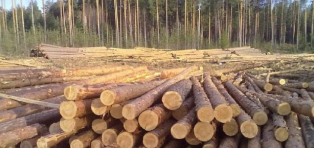 Finland: Dropping sawlog prices in October