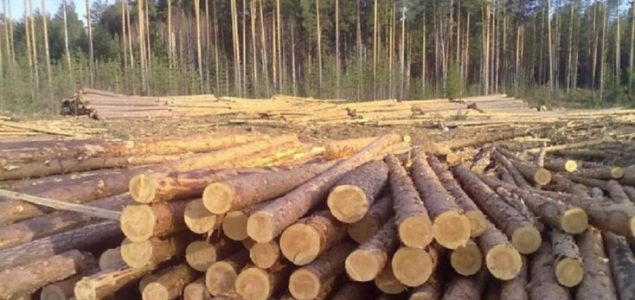 Finland: Roundwood prices shifting downwards in April, but higher yoy