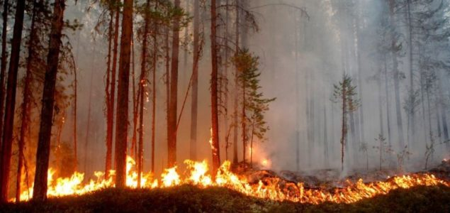 N. American lumber prices surge sharply as Canada wildfires cut sawmills production, shipments