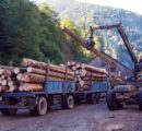 EU requested consultations with Ukraine over wood export ban