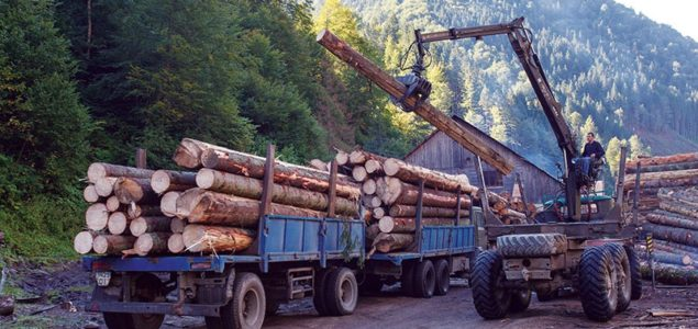 New investigation accuses EU sawmills of importing illegally logged wood from Ukraine