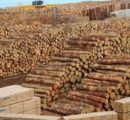 European spruce logs and lumber exports to China see strong rise in Jan.-Sep. 2020