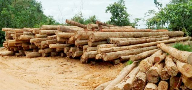 Malaysia: Rising prices for Sarawak logs due to increased demand