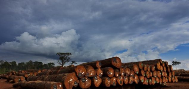 Corruption scandal hits hard Gabon's timber industry