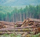 British Columbia's largest forestry delegation to visit China, Japan and South Korea at the end of 2018