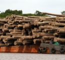 Logs supply shortage in Malaysia and Indonesia forces many plywood mills to halt production