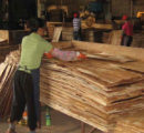Vietnam bans import of Chinese plywood