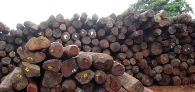 Ghana: Rosewood harvesting, transport and export banned