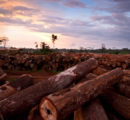 Congo: New forest code could totally ban exports of logs