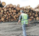 Corona makes it harder for the German hardwood industry