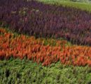 Czech forest owners face losses of US$ 1.70 billion due to the bark beetle infestation