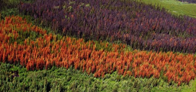 France: Heatwave expected to bring bark beetle infestation; softwood prices already down sharply