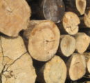 August prices for Brazilian logs, sawnwood and plywood