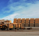 Europe sends massive amounts of softwood logs and lumber to China