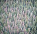 Bark beetle emergency: The current situation on the European roundwood market is unprecedented