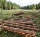 Bark beetle infestation and storm damaged timber in Europe rapidly changing global trade flows