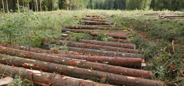 Record logging in the Czech Republic due to bark beetle infestation
