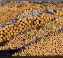 Record pace for German exports of logs; 50% goes to China
