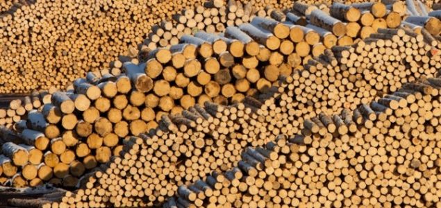 Sawlog prices falling in most major markets around the world in 3Q/2019