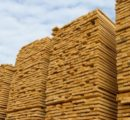 China: Prices of imported lumber in October 2019