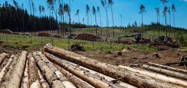 Czech Republic: Bark beetle infestation expected to double this year and again in 2021