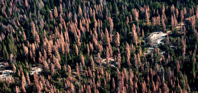 Central Europe's spruce bark beetle crisis could be larger than BC's pine beetle epidemic