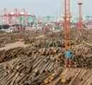 Prices for imported softwood timber have skyrocketed in China