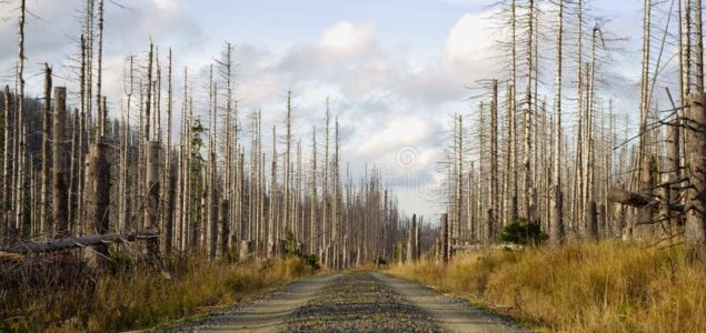Great drought in April announces the third consecutive year of bark beetle calamity for the German forests