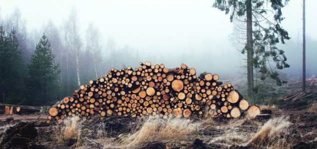 Sharp fall in roundwood prices in Latvia