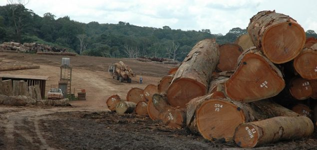 African tropical timber: Asian buyers slowly returning; prices for EU market up