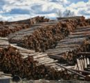 COVID-19 pandemic could be an opportunity to revive B.C. forestry industry