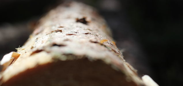 Will the forest products industry evolve post Covid-19?
