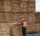 Canadian lumber giants' shares see spectacular rise on strong demand and prices