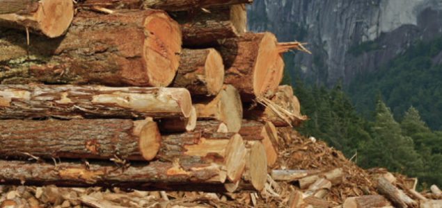 China says pests found in Canadian exports of logs, asks for investigation