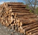 The downturn in Finland's wood market expected to continue; log prices to fall by 3-4% this year