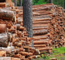 Closure of paper mill shifts focus on condition of Finland's forestry sector