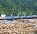 Covid-19 significantly impacts Indian imports of logs